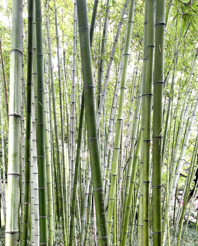 Was macht Büro Möbel aus Bambus so umweltfreundlich Vital fice