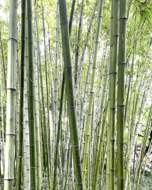 Was macht Büro Möbel aus Bambus so umweltfreundlich?